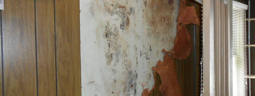 NPN Environmental Indoor Air Quality Management Suspect Mold On Wall